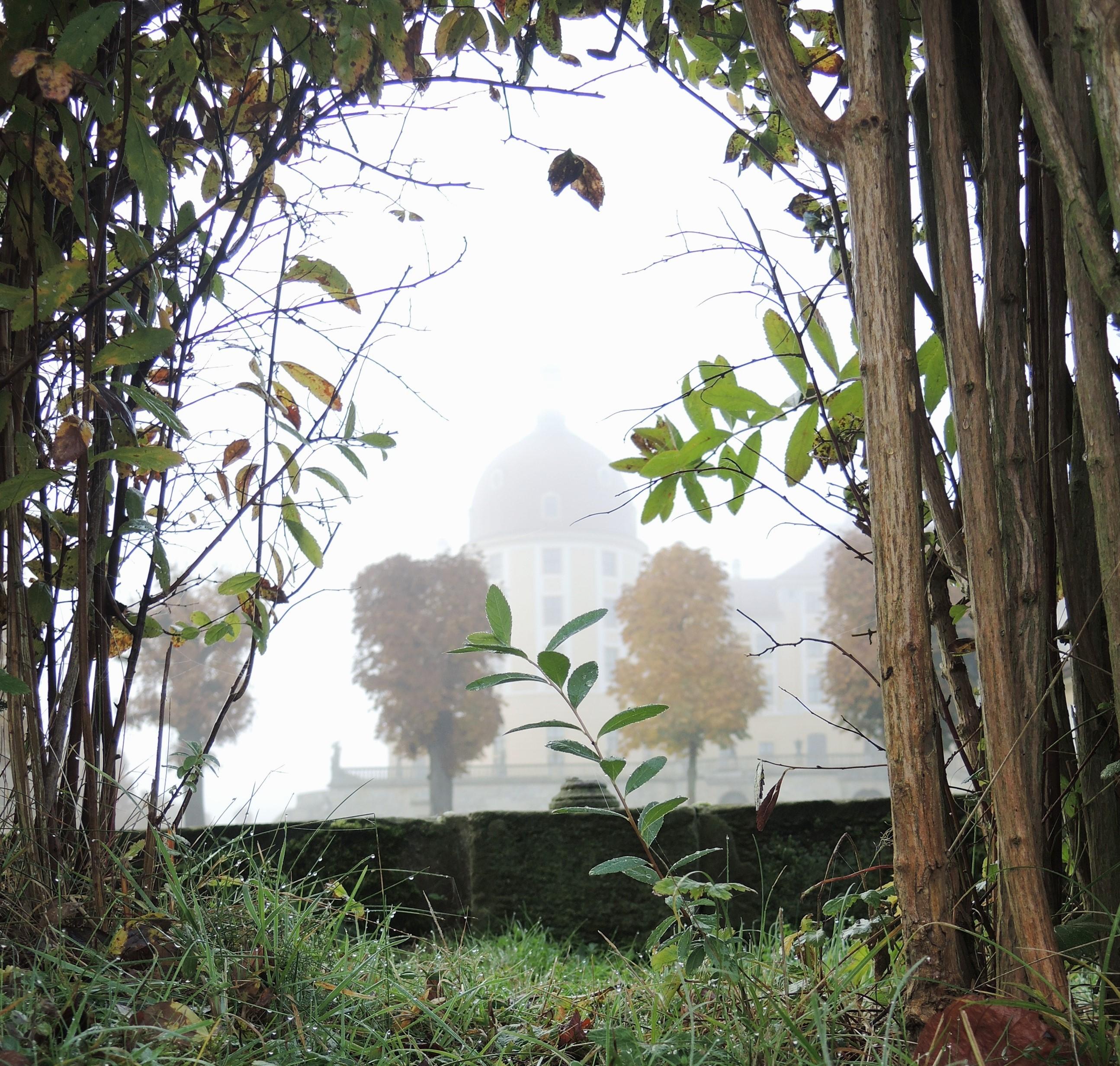 November – geheimnisvoller Nebel